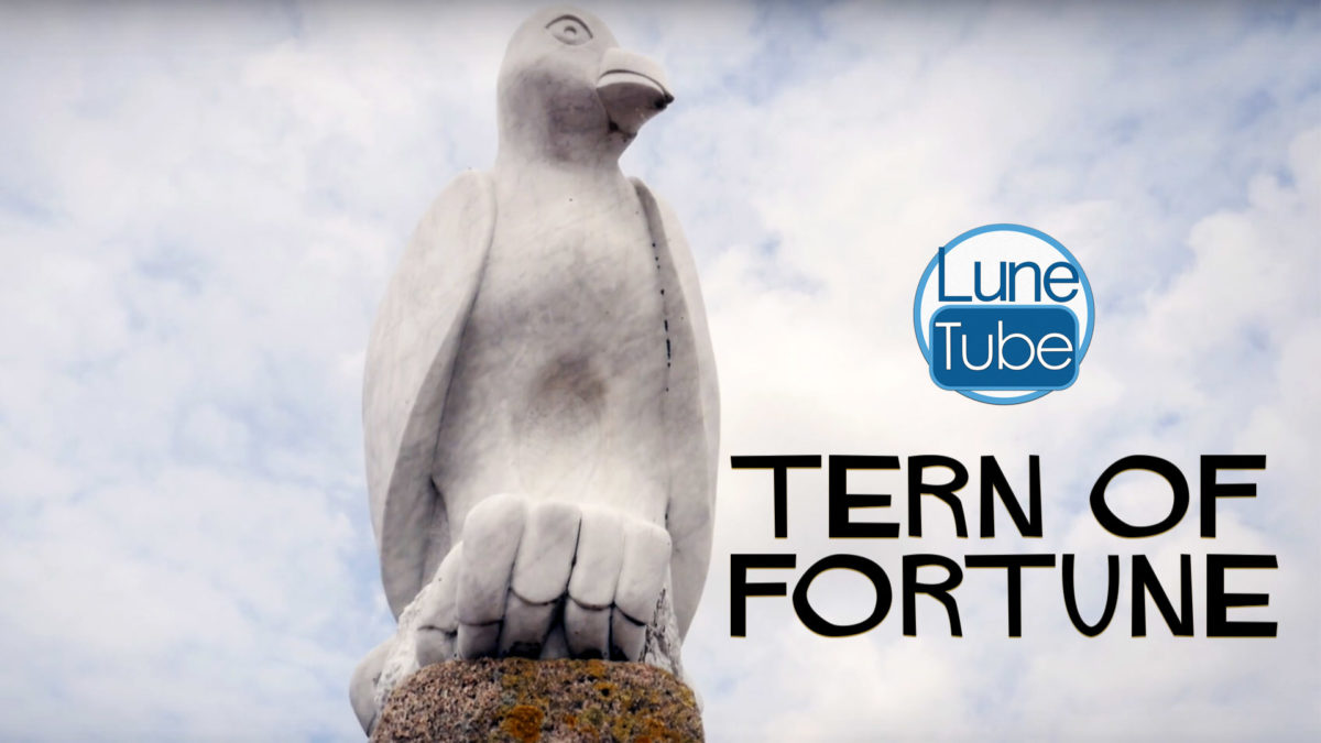 TERN OF FORTUNE